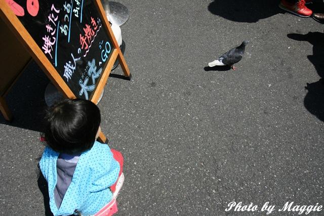 霏霏看鴿子