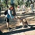 1994 In Australia