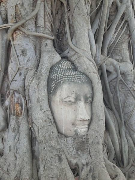 1/12 大城 Wat Mahathat