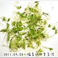 2011.07.03四季豆泥 (2)