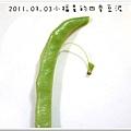 2011.07.03四季豆泥 (1)