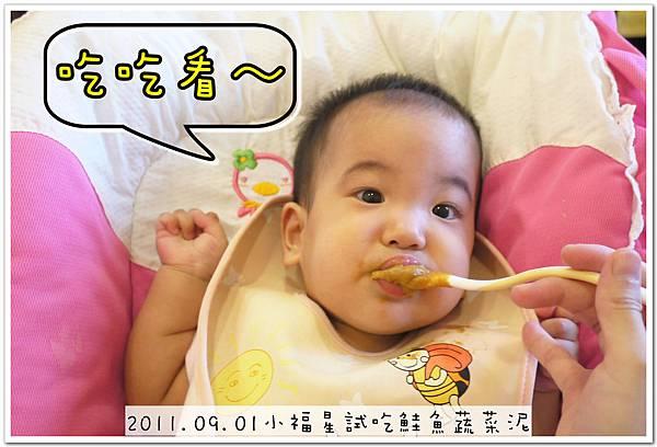 2011.09.01 小福星試吃happy baby鮭魚蔬菜泥 (9).JPG