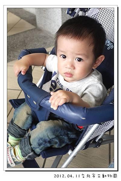 2012.04.11台北市立動物園 (4)