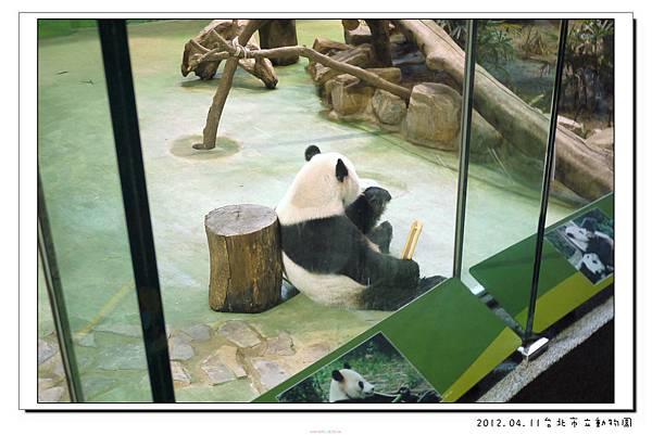 2012.04.11台北市立動物園 (11)