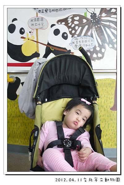 2012.04.11台北市立動物園 (13)