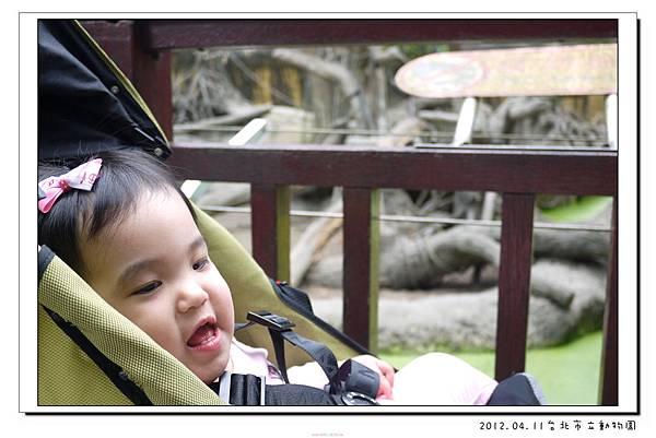 2012.04.11台北市立動物園 (17)