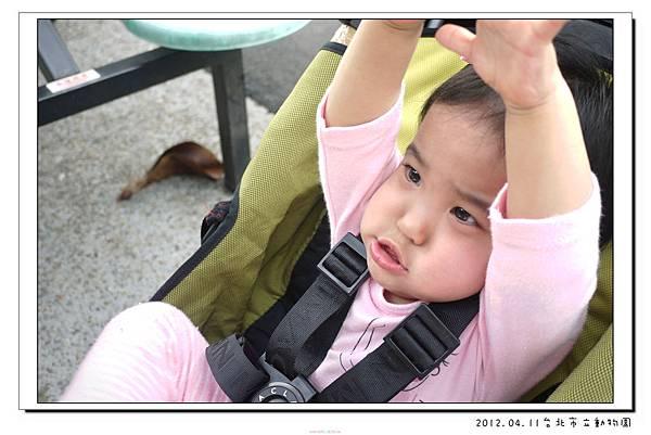 2012.04.11台北市立動物園 (18)