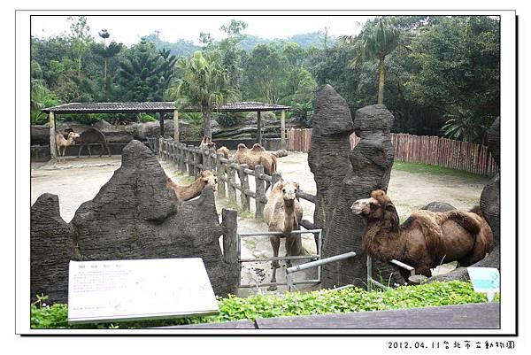 2012.04.11台北市立動物園 (20)
