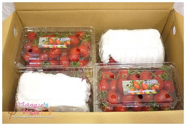 九芎林溫室農園-玉女番茄 (2).JPG