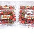 九芎林溫室農園-玉女番茄 (3).JPG