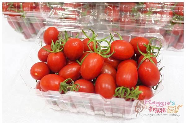 九芎林溫室農園-玉女番茄 (5).JPG