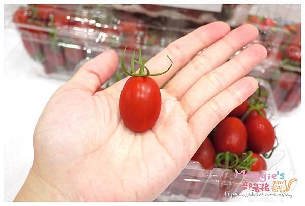 九芎林溫室農園-玉女番茄 (6).JPG