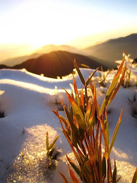 台灣也有很美麗的雪景3.jpg