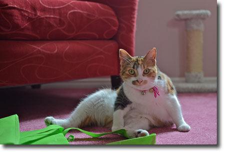 Jennifer 的貓