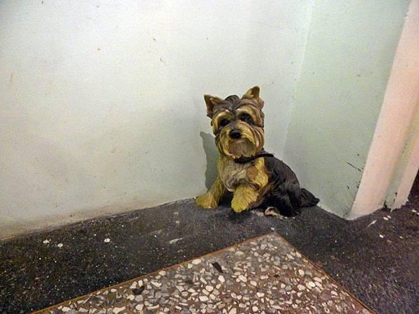 角落裡的小狗.JPG