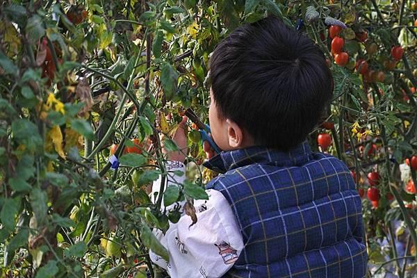 永福草莓園-小帥哥.JPG