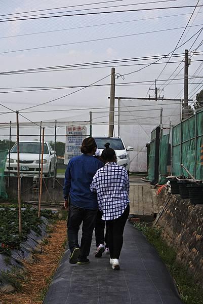 永福草莓園-背影1.JPG