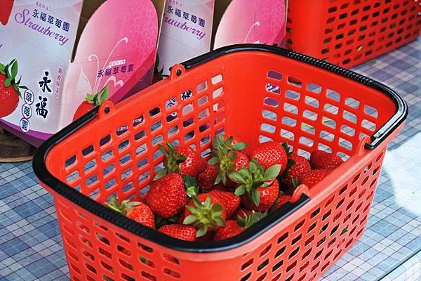 永福草莓園33.JPG