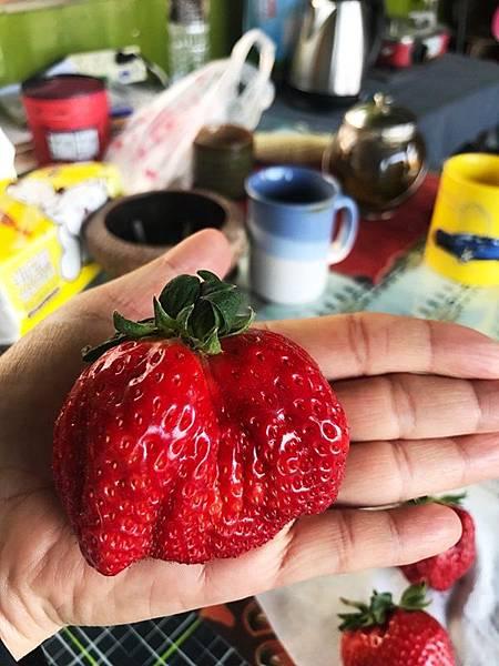 大草莓1.jpg