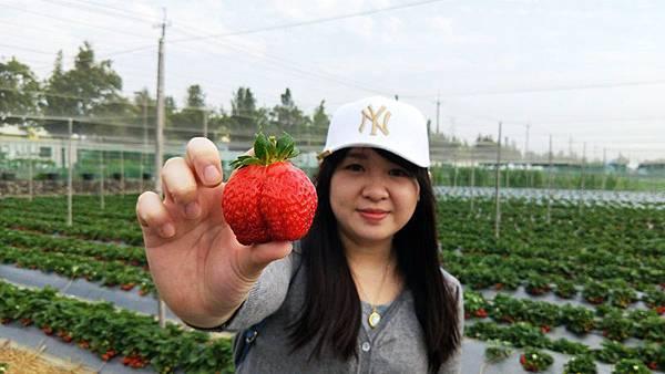 永福草莓園-大草莓.jpg