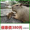 台南頑皮世界野生動物園~優惠價380元