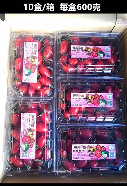 溫室的玉女小蕃茄3