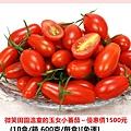 微笑田園溫室的玉女小蕃茄~優惠價1500元