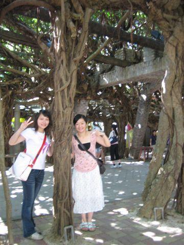 榕樹下.jpg