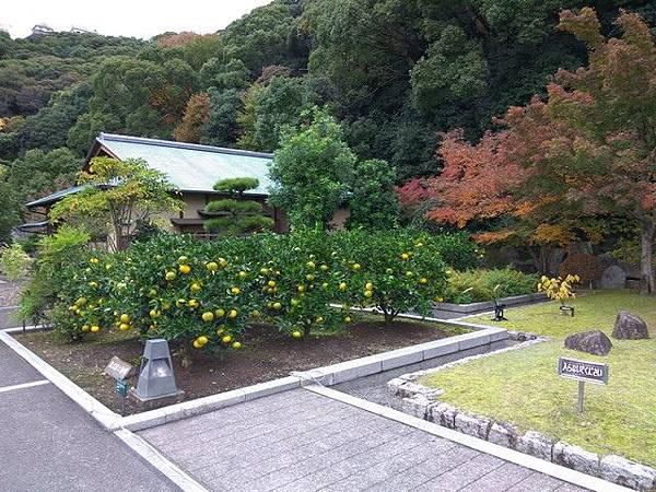 IMG_038表御殿跡的柑橘花草園.jpg