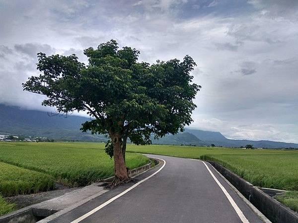 IMG_031蔡依林樹.jpg