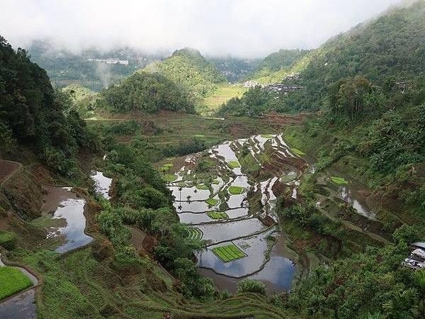 IMG_011巴拿威梯田(Banaue Rice Terraces).jpg