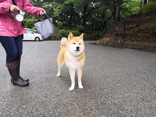IMG_031秋田犬.jpg