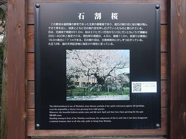 IMG_024石割櫻.jpg