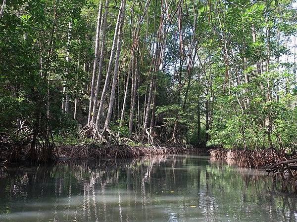 IMG_008紅樹林(Mangrove).jpg