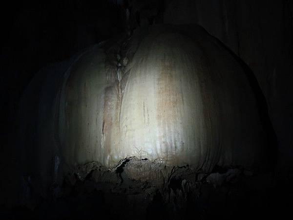 IMG_033大香菇.jpg