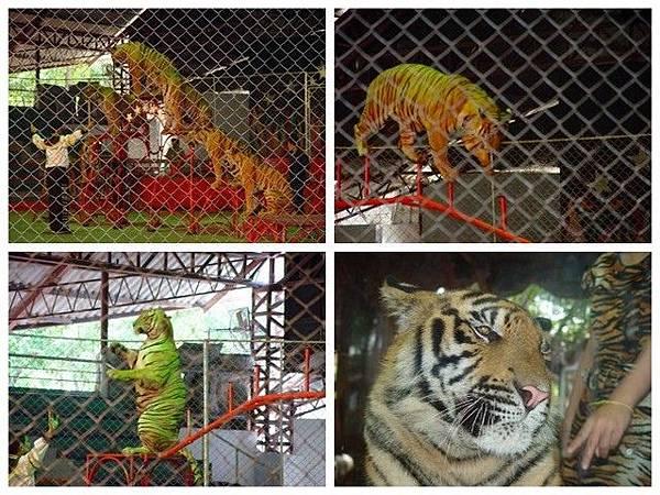 IMG_031是拉差龍虎園(Sriracha Tiger Zoo).jpg