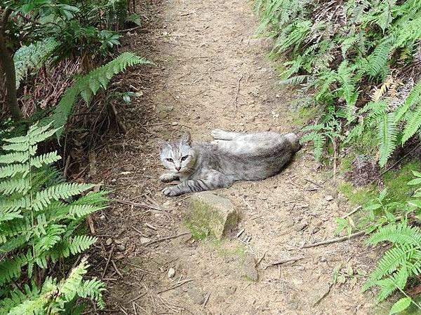 IMG_037八幡山的貓.jpg