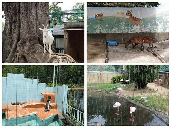 IMG_018和歌山公園動物園-羊、鹿、企鵝、紅鶴.jpg