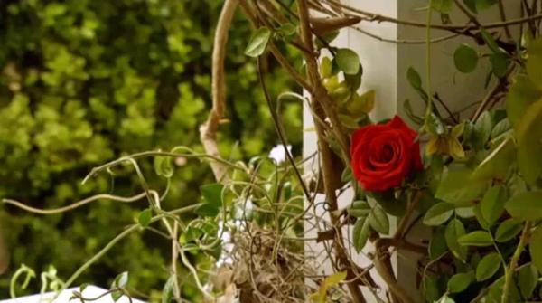 rose_001.jpg