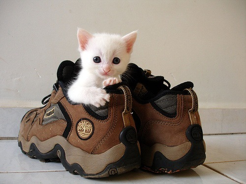 cat-in-shoe.jpg