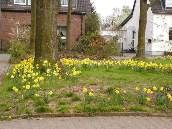 德國花園2
