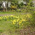 德國花園3