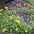 德國花園5
