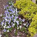 德國花園7