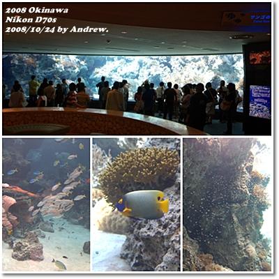 美之海水族館2.jpg