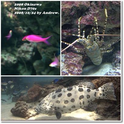 美之海水族館4.jpg