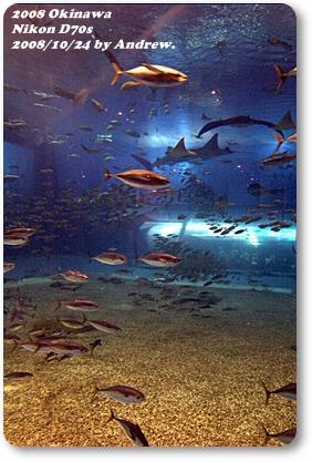 美之海水族館9.jpg