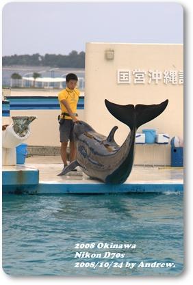 美之海水族館海豚.jpg