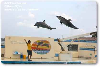 美之海水族館海豚3.jpg