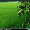 nEO_IMG_IMGP4053s.jpg
